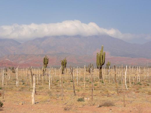 Het noordwesten van Argentinië: palmbomen, wijngaarden en gekleurde bergen.
