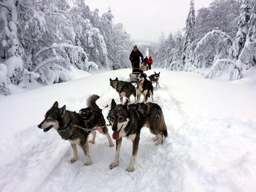 husky-ruka-finland