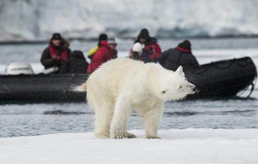 ijsbeer-spitsbergen-noorwegen