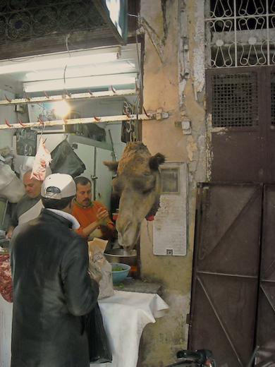 kameel-medina-fez-marokko