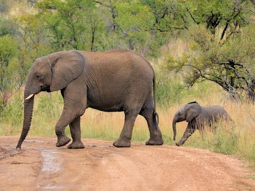 Unieke combi in Zuid-Afrika: camperreis en safari.